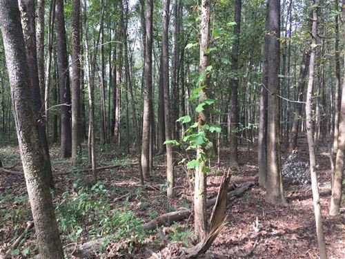 25 Acres of Timberland With Cadron : Wooster : Faulkner County : Arkansas