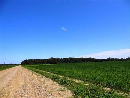 40 Acre Farm Near Cache River : Cotton Plant : Woodruff County : Arkansas