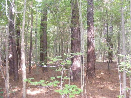 345 Acres of Premier Hunting And : Kilmichael : Montgomery County : Mississippi