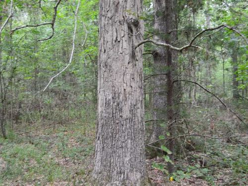 103 Acres Timber And Hunting Land : D'lo : Simpson County : Mississippi
