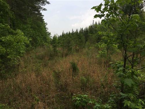 82 Acres Hunting And Timber LA : Starkville : Oktibbeha County : Mississippi