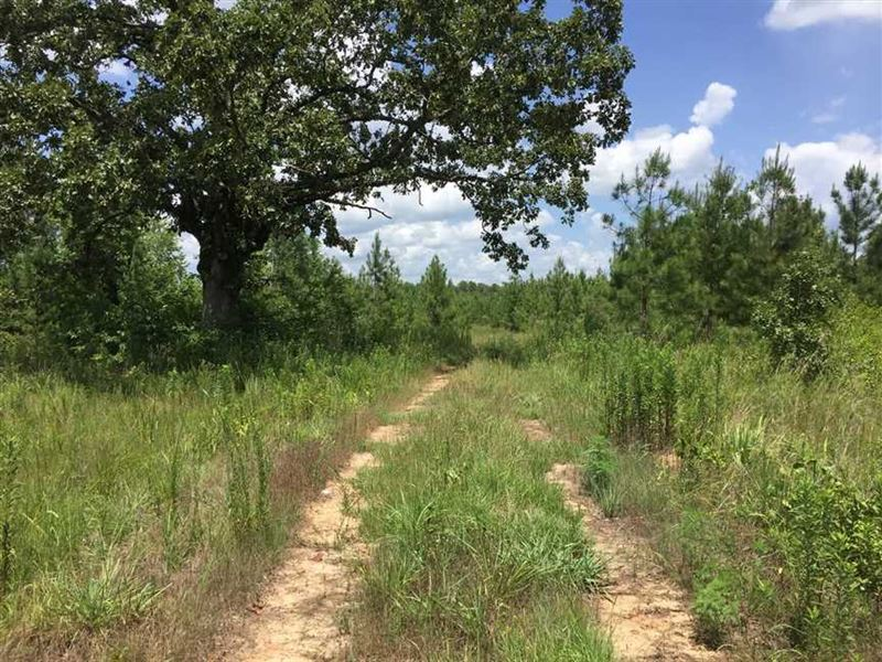 Big Price Reduction - 90.76 Acre : Philadelphia : Neshoba County : Mississippi