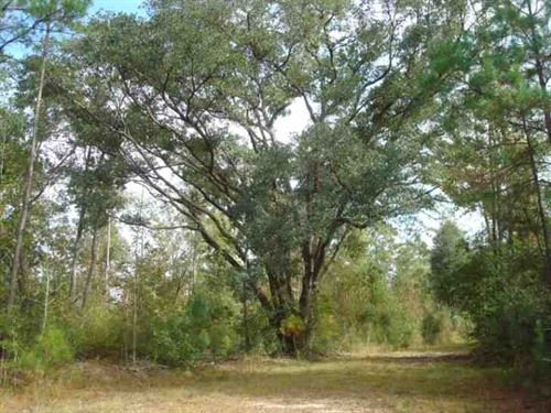 1549 Acres Hunting, Developmen : Picayune : Pearl River County : Mississippi