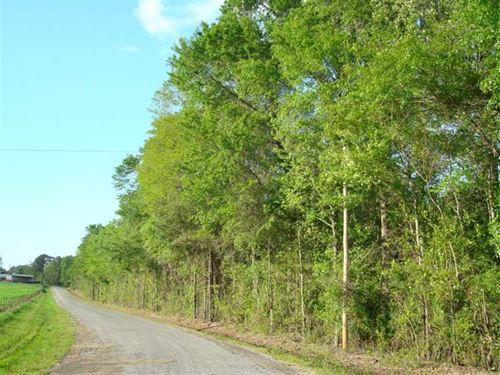 17.54 Acres, Tract 95, Mini-F : Brandon : Rankin County : Mississippi