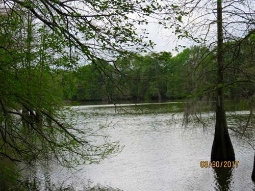 300 Acres Great Deer And Duck : Waterproof : Tensas Parish : Louisiana