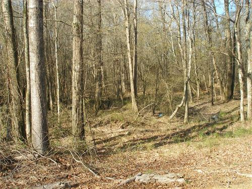 Timber Investment And Hunting Trac : Hamilton : Monroe County : Mississippi