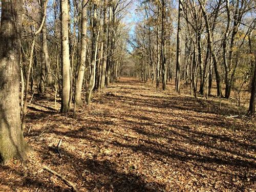 The Cotton Mill Tract - Hunting : West Point : Clay County : Mississippi