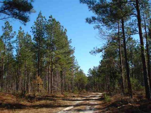 Land For Sale 249 Acres in Bur : Waynesboro : Burke County : Georgia
