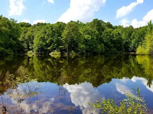 130 Acres + - 2 Lakes, Plenty Of : Selmer : McNairy County : Tennessee