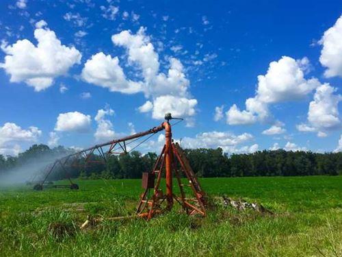 Irrigated Farmland With Great Hunt : Oglethorpe : Macon County : Georgia