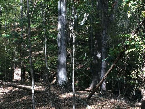 Land 22 Acres For Sale in Carrol : Greenwood : Carroll County : Mississippi