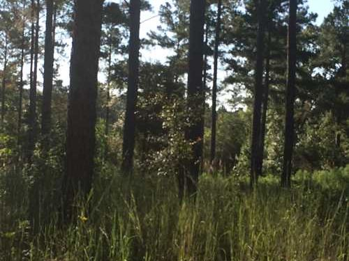 Land For Sale 225 Acres in Carro : Carrollton : Carroll County : Mississippi