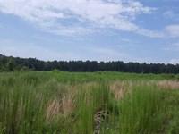 Brushy Creek Tract, Red River Pari : Coushatta : Red River Parish : Louisiana