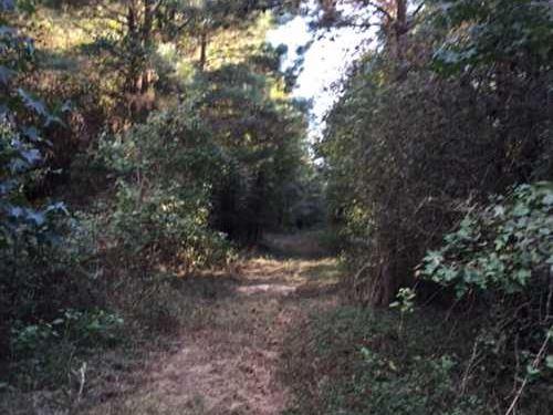 Mott Road Tract, Bossier Parish, 8 : Plain Dealing : Bossier Parish : Louisiana