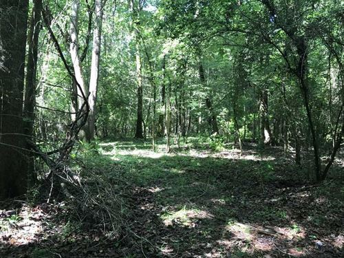 Hunters Dream, 49 Acres of Rec : Moundville : Tuscaloosa County : Alabama
