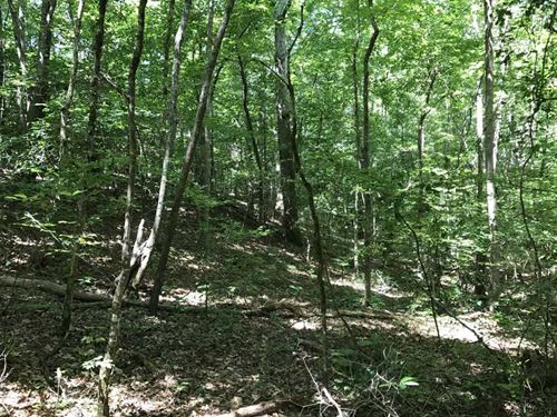 242 Acres in Clay County Near Bluf : Bluff Springs : Clay County : Alabama
