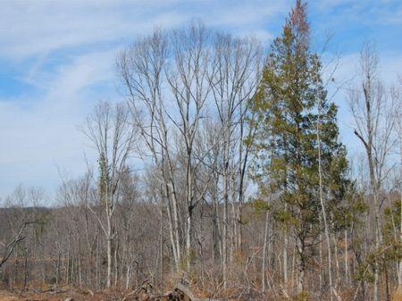 550 Acre Recreational Tract : Union : Union County : South Carolina