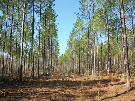 Timber Investment Or Hunting : Dublin : Laurens County : Georgia