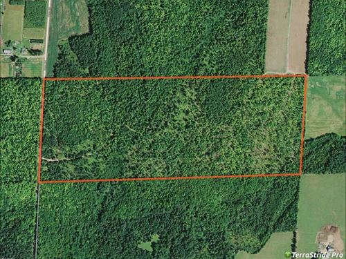 100 Acres Prime Hunting Land For : Park Falls : Price County : Wisconsin