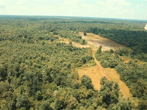 Hatchie River Hunting Land For Sale : Bolivar : Hardeman County : Tennessee