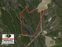 71 Acres of Timber Land For Sale : White Oak : Bladen County : North Carolina