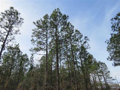 28 Acres of Development Land For : Leland : Brunswick County : North Carolina