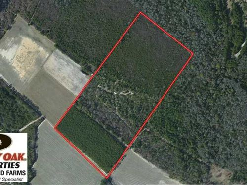 39.7 Acres of Hunting And Timber : Evergreen : Columbus County : North Carolina
