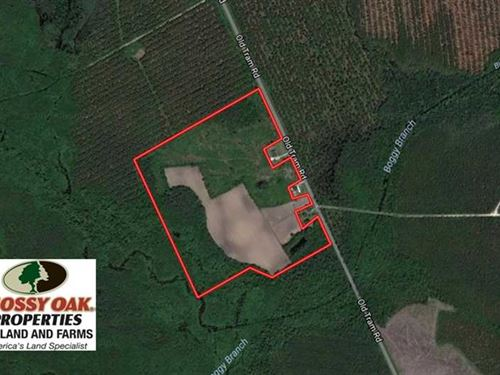 Reduced, 50.81 Acres of Hunting : Whiteville : Columbus County : North Carolina