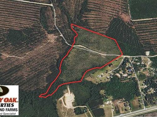 33 Acres of Hunting And Timber Lan : Beulaville : Duplin County : North Carolina