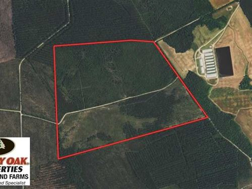 204 Acres of Hunting And Timberlan : Beulaville : Duplin County : North Carolina