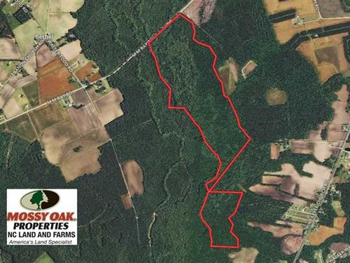 134 Acres of Hunting Land For Sale : Nakina : Columbus County : North Carolina