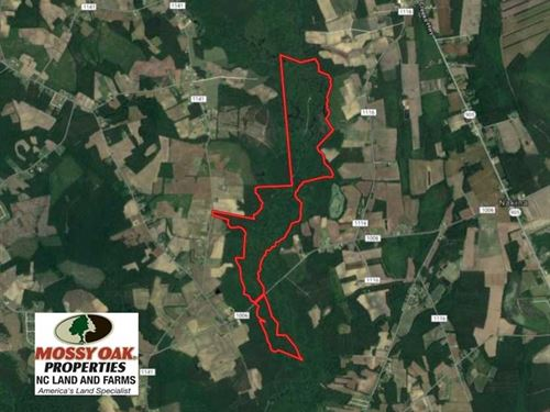 482 Acres of Hunting Land For Sale : Clarendon : Columbus County : North Carolina