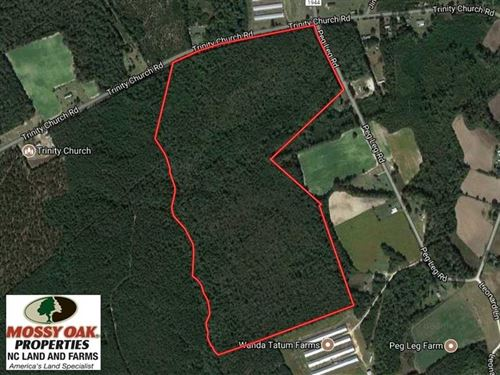 Reduced, 101 Acres of Timber Land : Magnolia : Sampson County : North Carolina