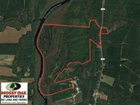Interest in 485 Acres of Hunting : Rocky Point : Pender County : North Carolina