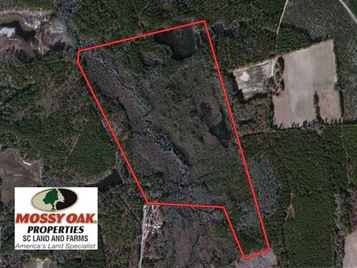 Under Contract, 99 Acres of Hunti : Bennettsville : Marlboro County : South Carolina
