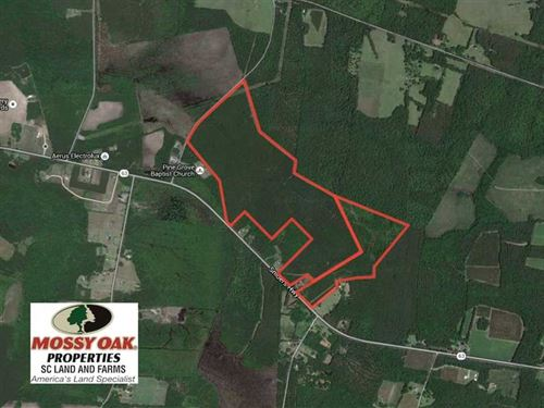 198 Acres of Timber And Hunting La : Walterboro : Colleton County : South Carolina