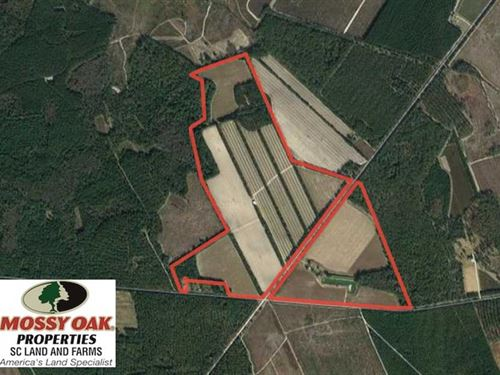 1200 Acre Produce Farm For Sale in : Islandton : Colleton County : South Carolina