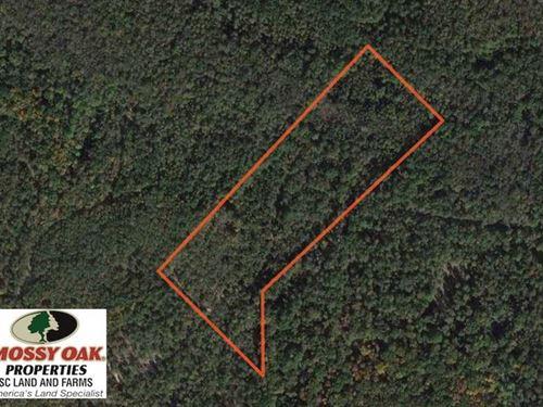 Reduced, 17 Acres of Hunting Lan : Neeses : Orangeburg County : South Carolina