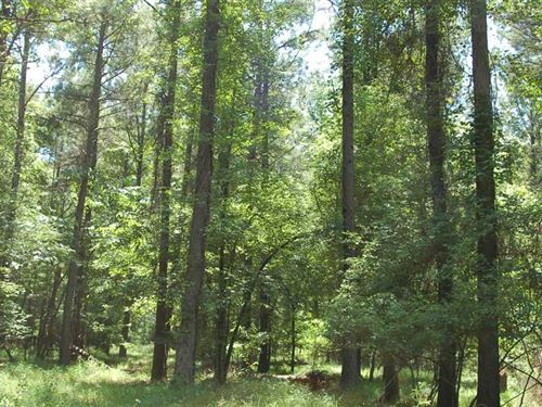 30 Acre Homesite OR Hunting Proper : Fitzpatrick : Bullock County : Alabama