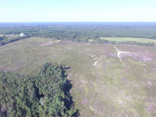Excellent Timber Investment/Recrea : Clayton : Barbour County : Alabama