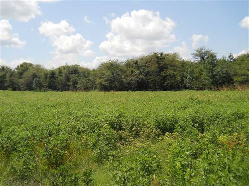 Delta Land at Unbelievable Price : Clarksdale : Coahoma County : Mississippi