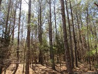 184 Acres of Investment & Hunting : Sallis : Attala County : Mississippi