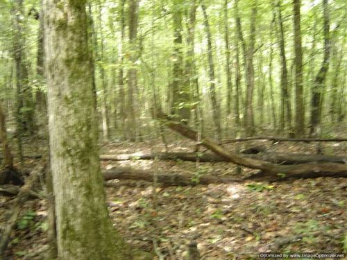 40 Ac of Recreational And Timberla : Louisville : Winston County : Mississippi