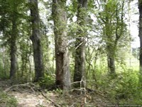 121.5 Acres of Timber Land an Recr : Poplar Creek : Montgomery County : Mississippi