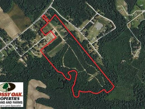 49 Acres of Hunting And Timber Lan : Pinetops : Edgecombe County : North Carolina