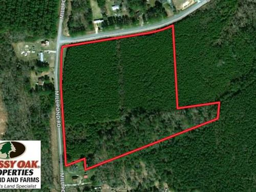 11.5 Acres of Investment Timberlan : Gatesville : Gates County : North Carolina