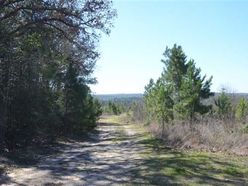 132 Acres of Young Timber For Sale : Mount Enterprise : Rusk County : Texas