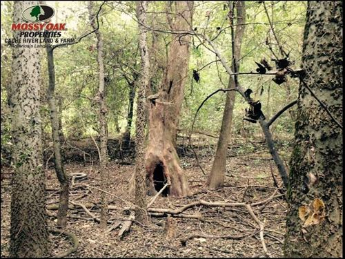 21.74 Acres Duck And Deer Hunting : Paragould : Greene County : Arkansas