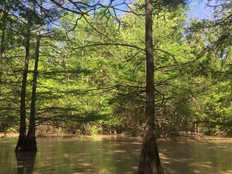 37 Acre Price Reduced, Property : Newport : Jackson County : Arkansas