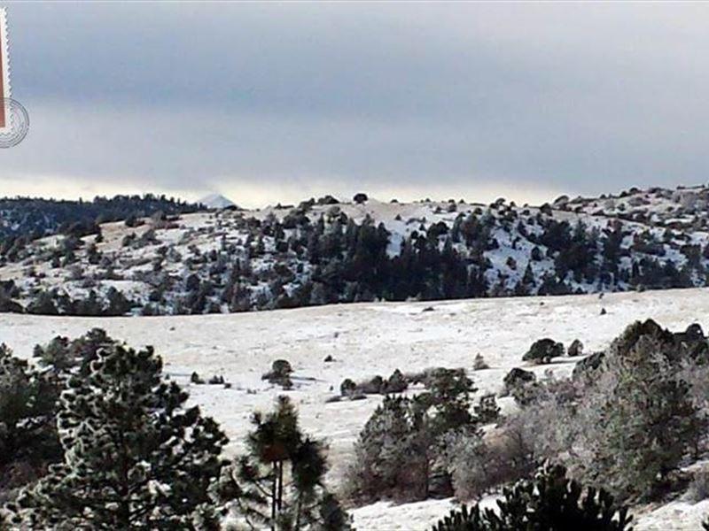 King Ranch Colorado : Canon City : Fremont County : Colorado